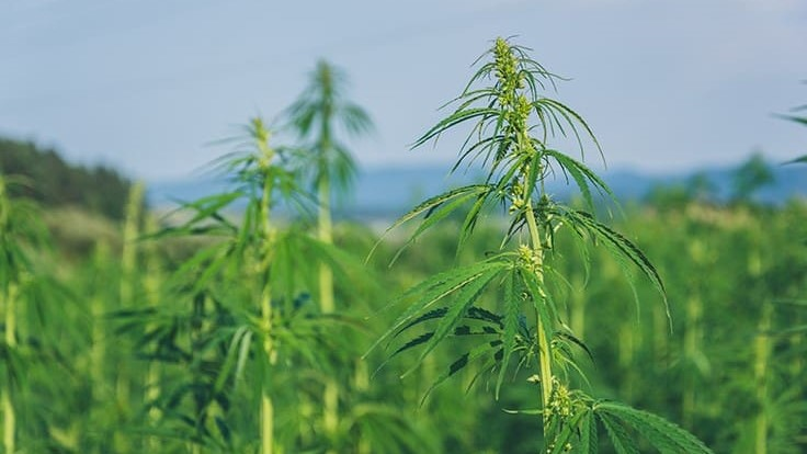 Ohio, Louisiana, New Jersey Are First States to Receive Federal Approval for Hemp Plans