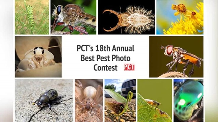 18th Annual PCT Best Pest Photo Contest Winner and Finalists