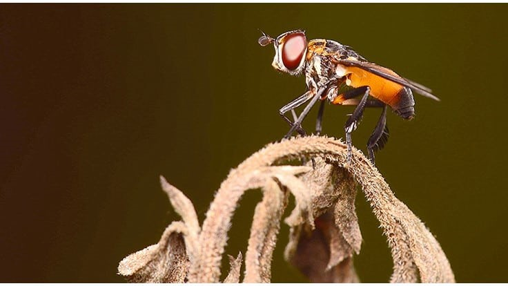 Winner of 18th Annual PCT Best Pest Photo Contest Announced