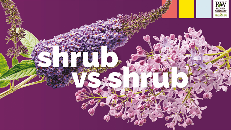 Proven Winners ColorChoice returns for its seventh year of Shrub Madness