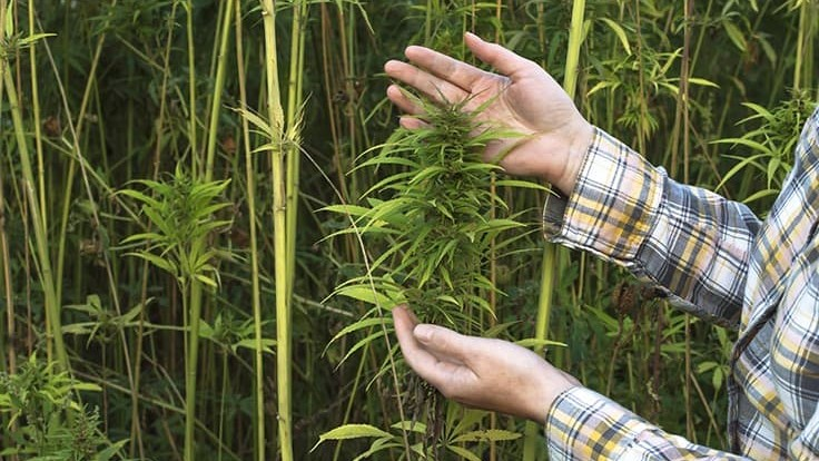 /florida-hemp-council-bills-seed-sourcing.aspx