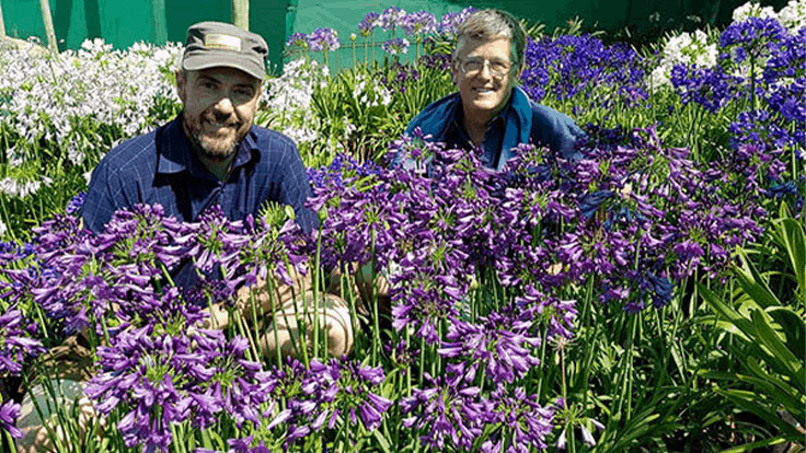 Poppin' Purple named Best New Perennial at IPM Essen