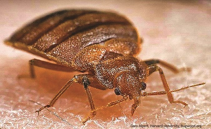 Poll: Bed Bug Fatigue?