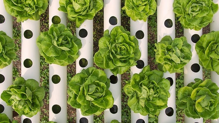 Ohio State University announces hydroponic crop production course