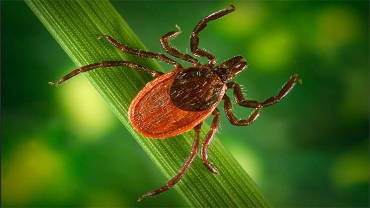 ESA: To Prevent Tick Encounters, Watch Where You Dump Your Leaves