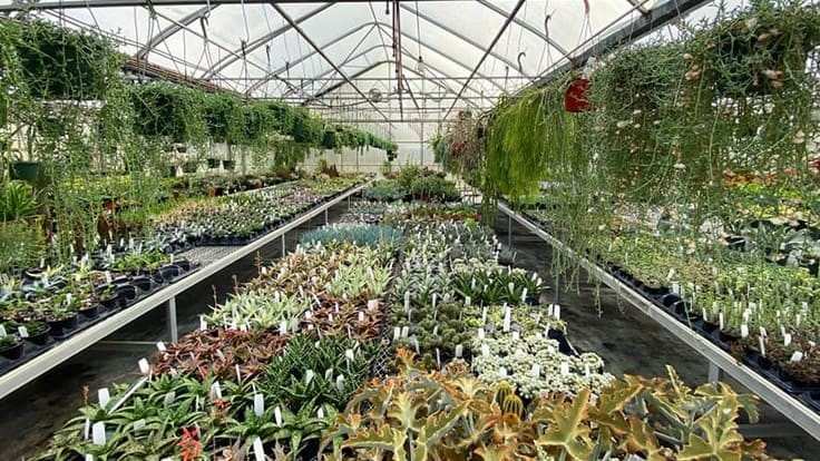 Greenhouses brace for coronavirus impact