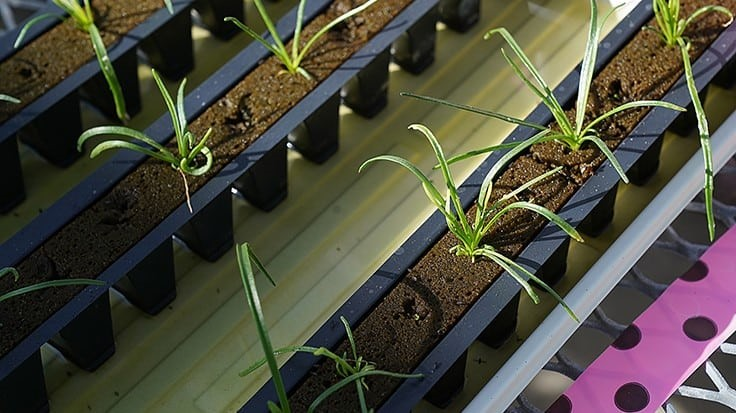 Risk of E. coli in Hydroponic and Aquaponic Systems May Be Greater Than Thought
