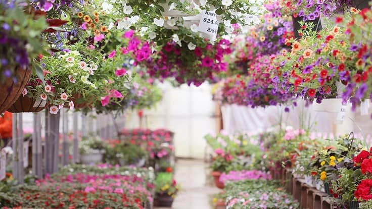 Updated Illinois order restricts shopping at garden centers