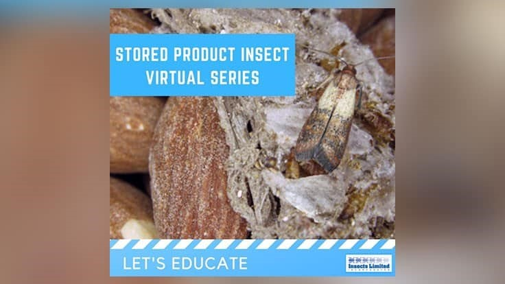 Insects Limited Hosted Stored Product Insects Webinar