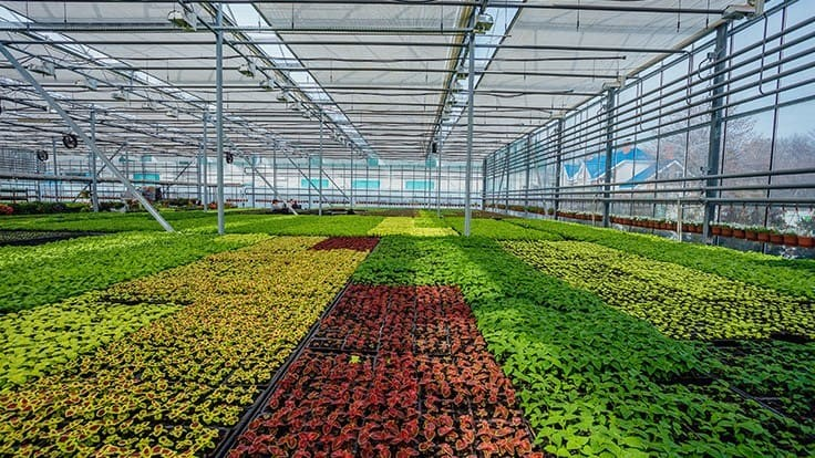 USDA confirms presence of Ralstonia in Michigan greenhouse