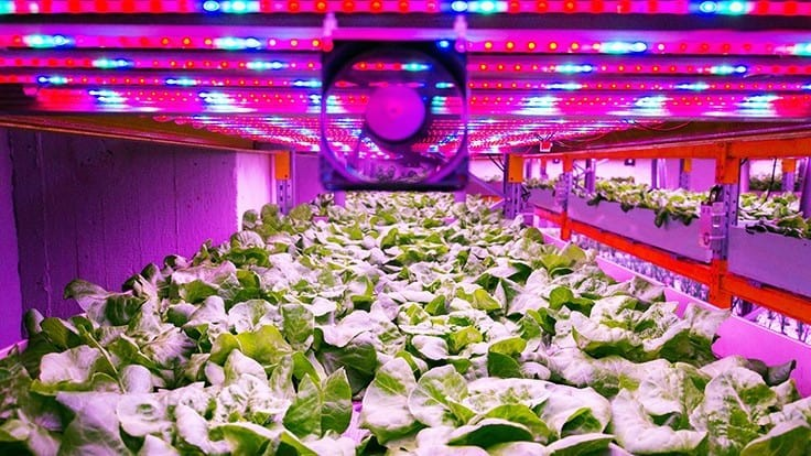 Indoor growers seeing increase in demand for greens