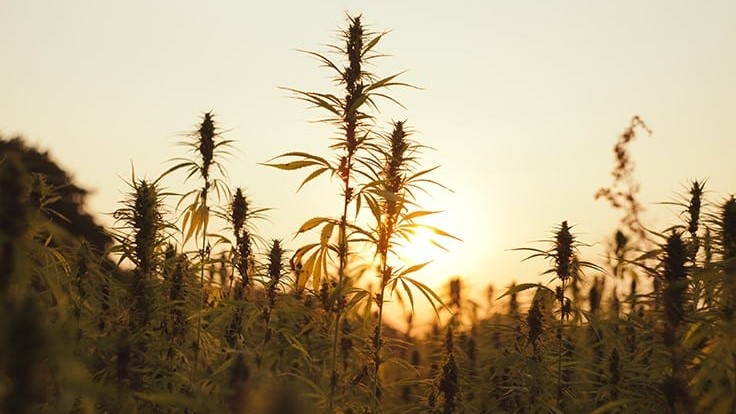 Start Small and Plan Ahead: Q&A with Doug Fine, Author of 'American Hemp Farmer'