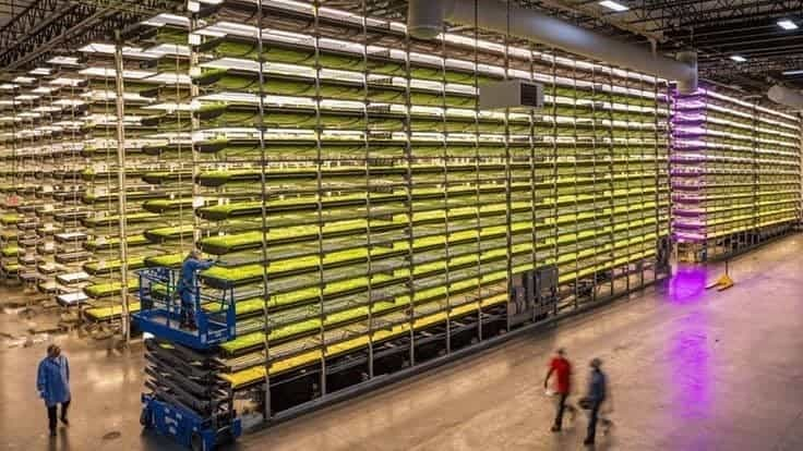 Vertical farm business brisk as COVID-19 sparks demand for local produce
