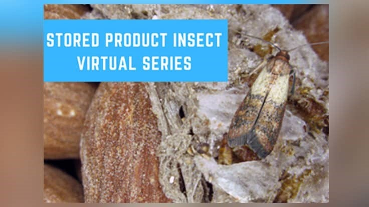 Insects Limited Launches Virtual Education Series