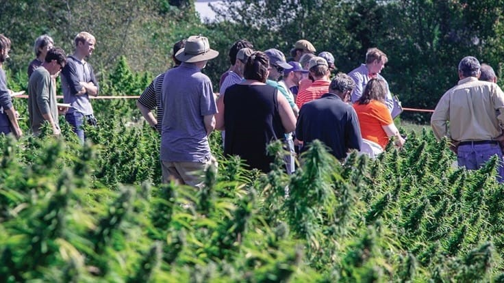 The Hemp Mine Builds on Partnerships, Offers Discounted Testing Services