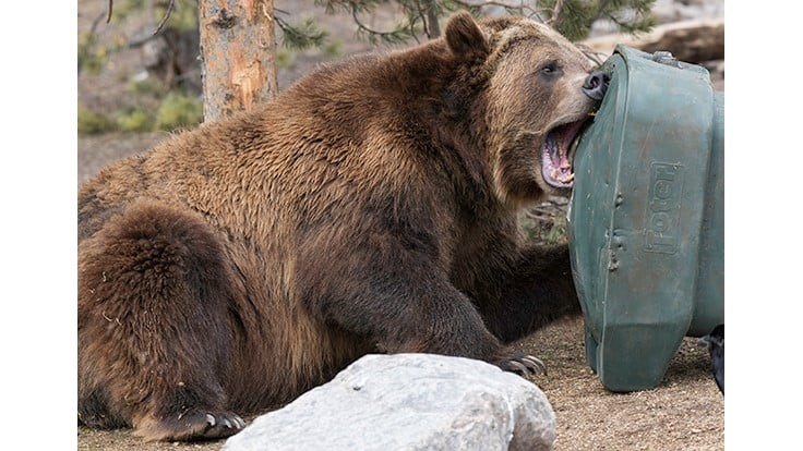 Toter earns bear-resistant certification for two bins