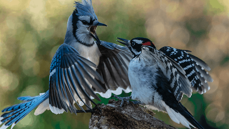 National Audubon Society and Bower & Branch announce Costco partnership