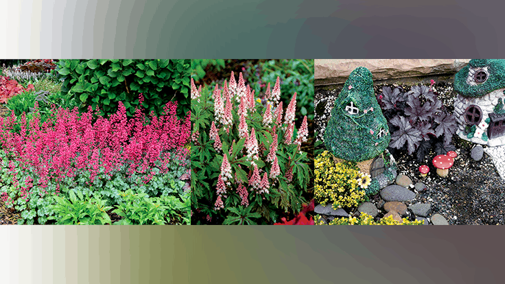 Terra Nova Nurseries announces new installment of variety video series