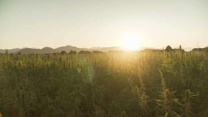 Illinois Hemp Growers Can Sell Product Into Legal Medical and Adult-Use Cannabis Markets