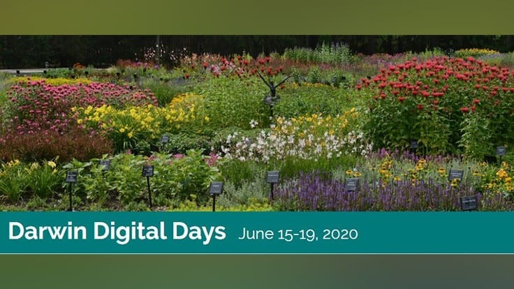 Registration open for Darwin Perennials Digital Days