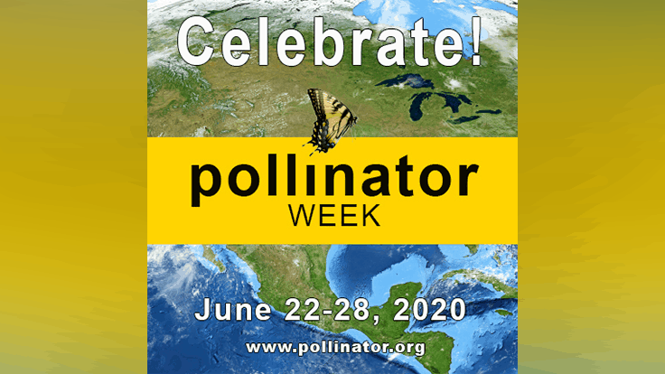 Celebrate National Pollinator Week