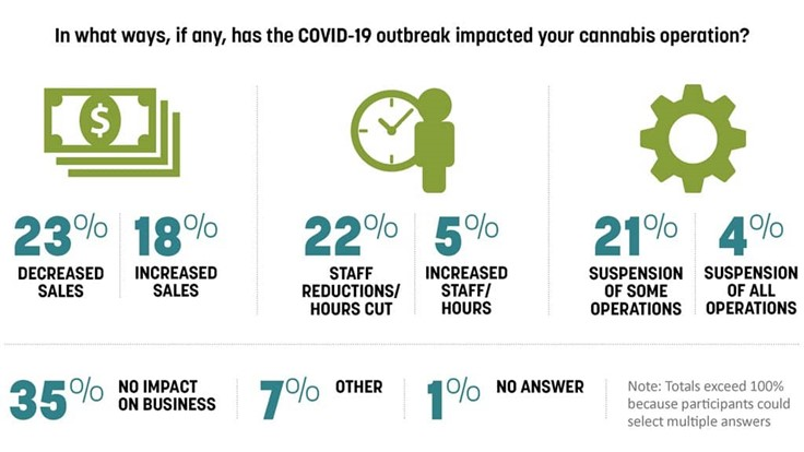Nearly Two-Thirds of Cannabis Cultivators Say COVID-19 Has Impacted Their Businesses