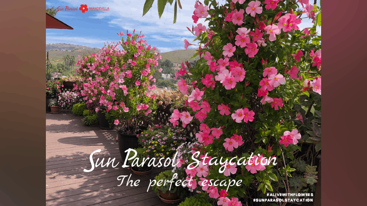 Suntory announces launch of Sun Parasol Staycation media kits