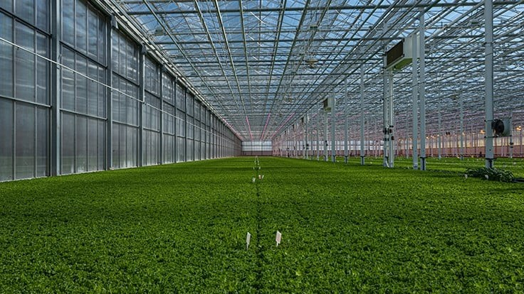 Revol Greens completes expansion to 10 acres of growing space
