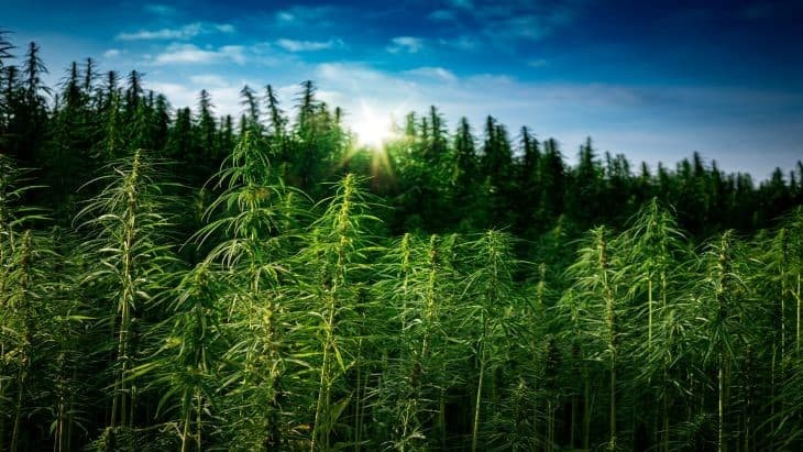 Penn State Extension Offers Budget Models for Hemp Growers