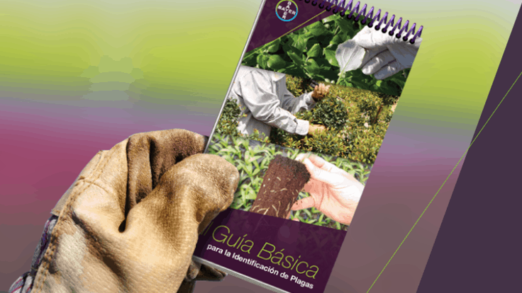 Bayer introduces new Spanish Pest Identification Guide for greenhouses and nurseries