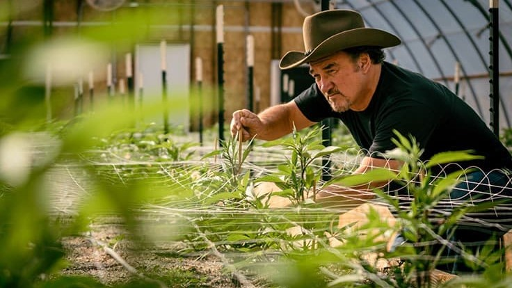Discovery Premieres New Reality Series 'Growing Belushi,' Documenting Jim Belushi's Oregon Cannabis Farm