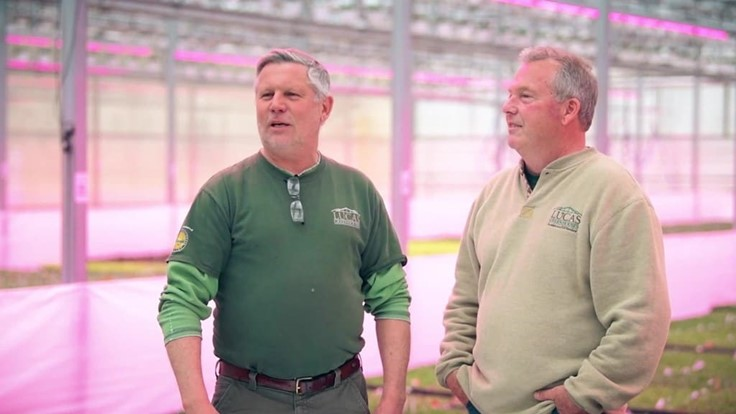 Lucas Greenhouses uses Philips LEDs to improve production