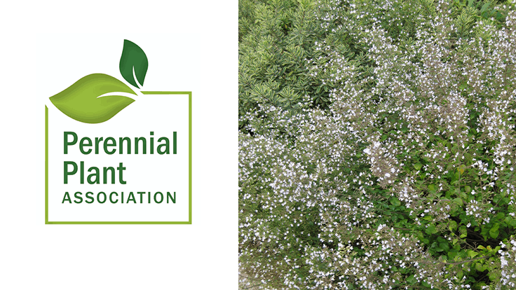 PPA announces 2021 Perennial Plant of the Year