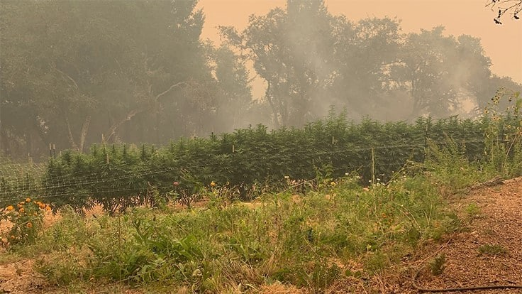 California Wildfires Continue to Ravage State Agriculture, Including Cannabis Farms