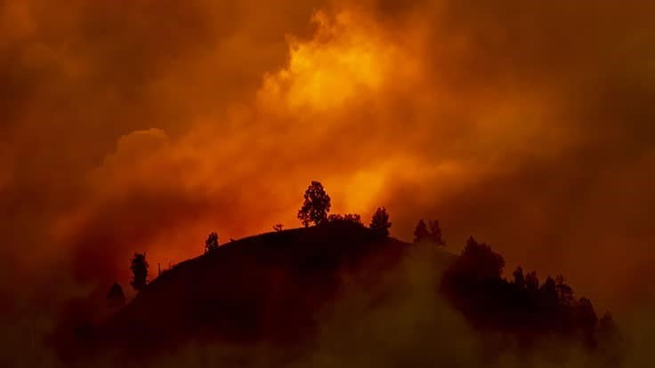 Wildfires Tear Across Western U.S. as Cannabis Growers Prepare and Respond: Week in Review