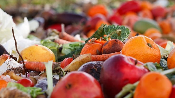 SWACO partners with Rev1 Ventures to fuel startups innovating food waste reduction