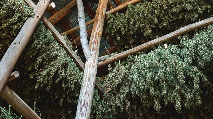 /asheville-hemp-project-drying-curing-barns.aspx