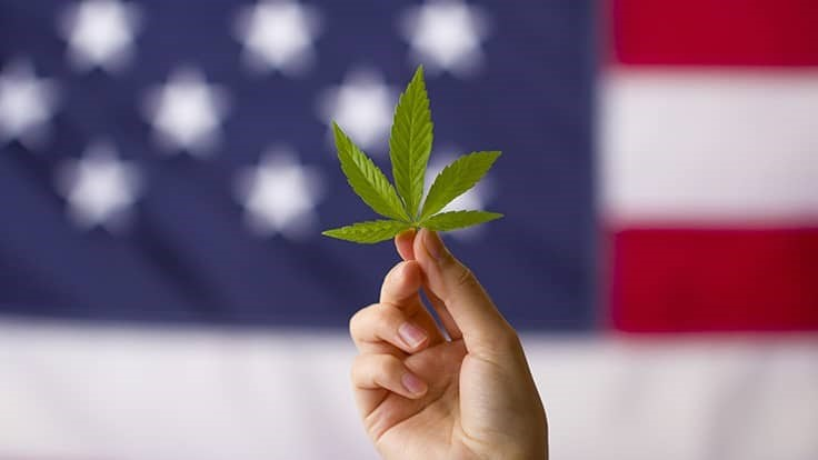 Election 2020: Cannabis Down-Ballot Race Results
