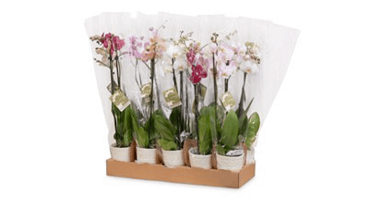 Westerlay Orchids expands wholesale online presence