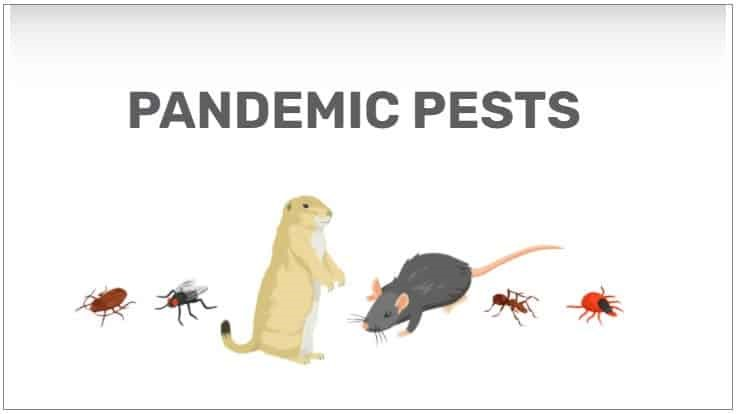 Pest Control Firm's Survey Finds 1 in 4 U.S. Households Have Seen a COVID-19 Pest Surge