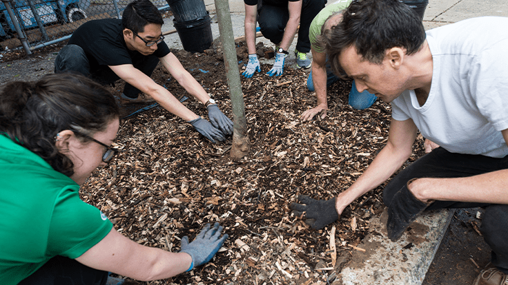 PHS hosts volunteer tree plantings in Philadelphia region