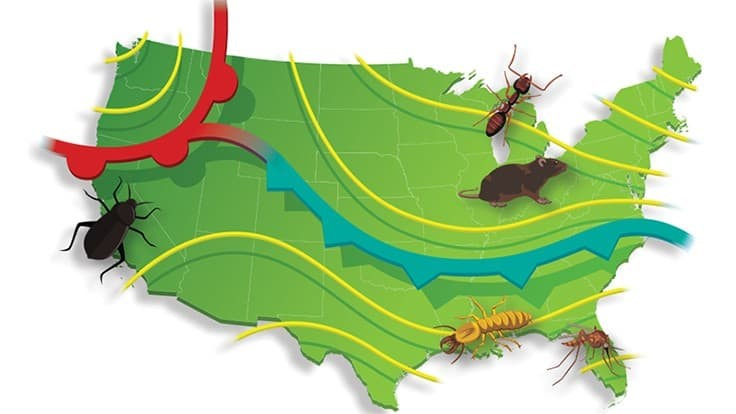 Entomologists From Rentokil North America Make 2021 Pest Predictions