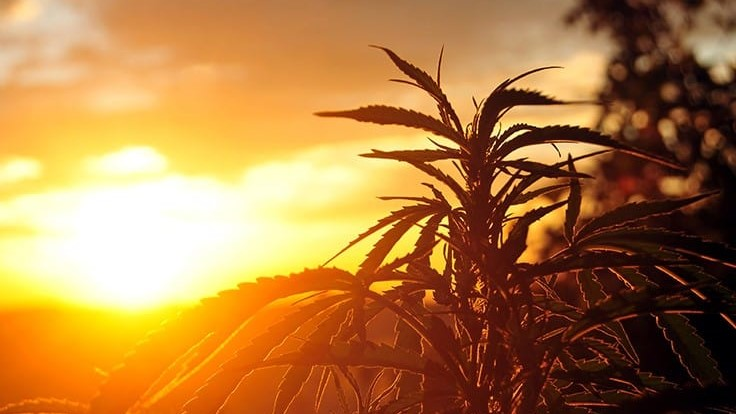 Florida Agriculture Commissioner Sets High Goals for Hemp Production