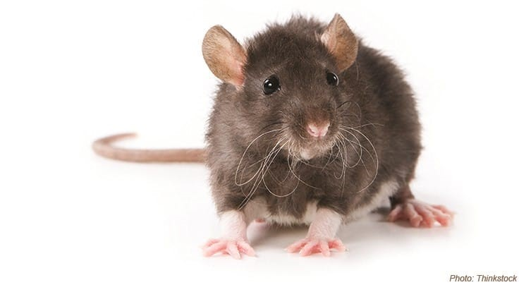 The Benefits of Electronic Rodent Monitoring (ERM)