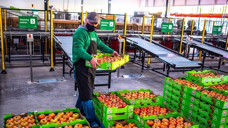AppHarvest sends first tomato crop to retail shelves