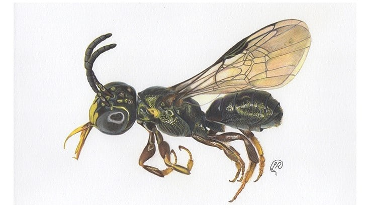 New Bee Species Discovered on Bayer Partner Farm in Brazil