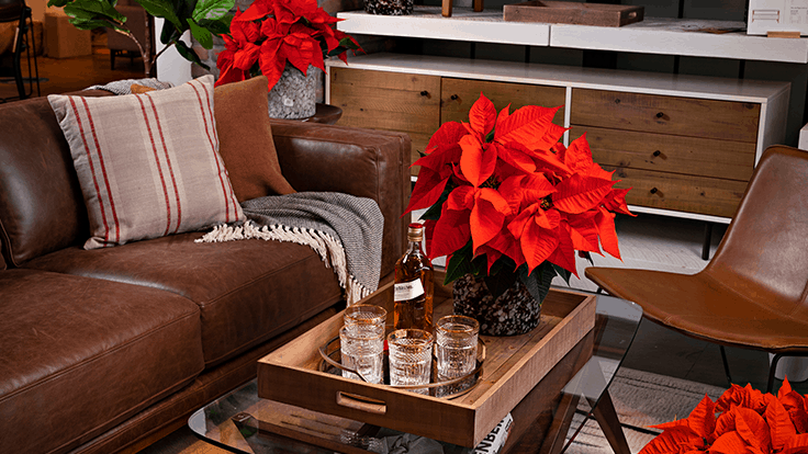 Dümmen Orange debuts 'Norwin' poinsettia