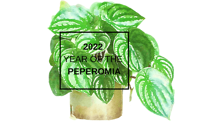 "NGB announces houseplant category for ""Year of the"" program"