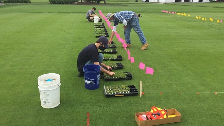 Penn State study: Poa annua remembers being mowed