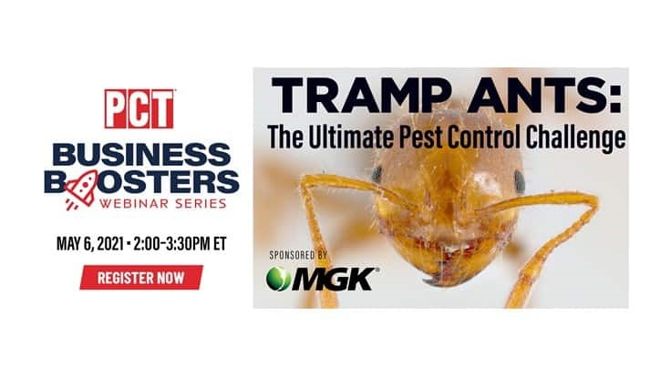 Upcoming Webinar: Tramp Ants: The Ultimate Pest Control Challenge
